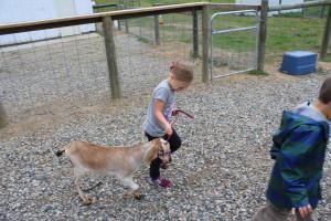 A camper walks her goat.