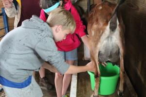An Orange Pepper milks Dorothy during barn chores.