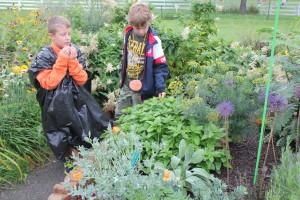 Orange Peppers smell the lemon balm plant in the children's garden.